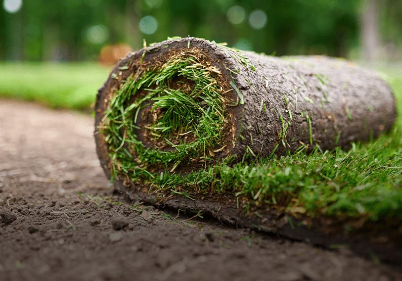 Zakładanie trawnika zrolki izsiewu