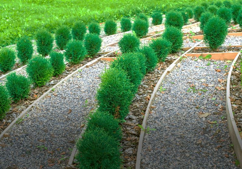 małe roślinki